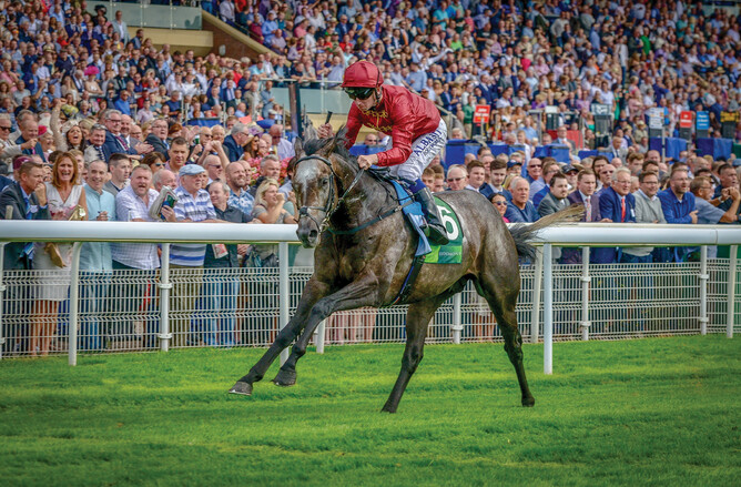 Cartier Champion three-year-old and UK Horse of the Year Roaring Lion - Supplied