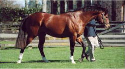 Volksraad, champion New Zealand sire, 2004-05