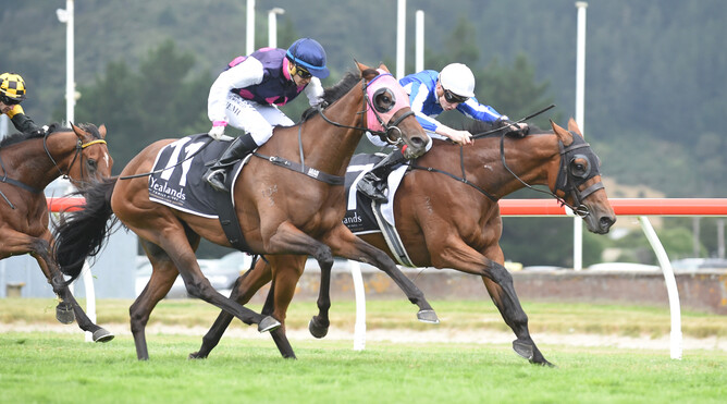 Gorbachev winning the Wellington Cup - photo credit racing images