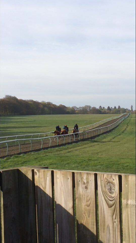 Uphill gallops in Newmarket