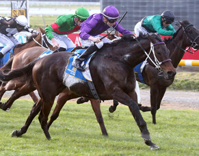 First NZ Stakes race for the new season goes to Platinum Command