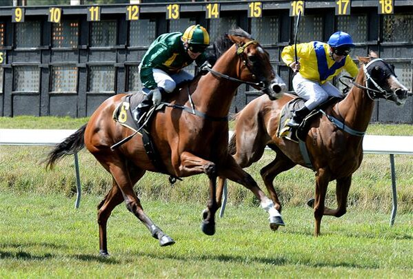 Tie Me Down wins the Wairarapa Thoroughbred Stakes 6-2-15. - Picture courtesy of Race Images