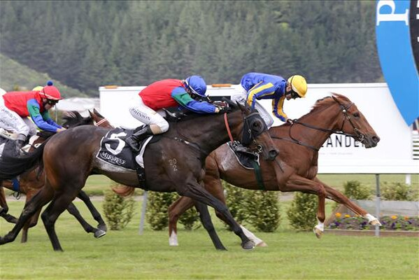 Showboy (inside) wins the Gr.2 Golden Homes Wakefield Challenge Stakes. - Picture courtesy of Trish Dunell