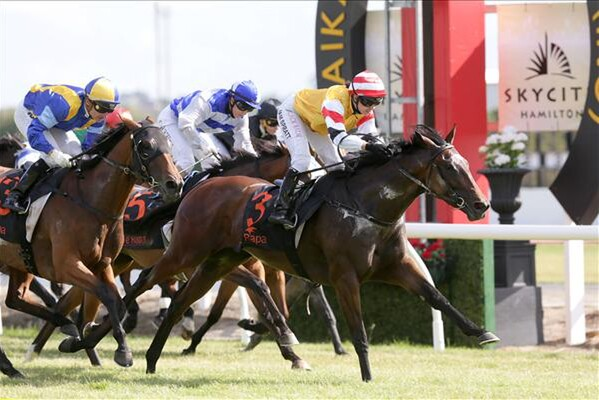 Stolen Dance winning the Cal Isuzu Stakes at Te Rapa 12/12/15 - Photo courtesy of Trish Dunell