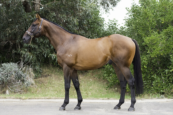 Howard Be Thy Name will stand at Grassyards Farm this coming breeding season. - Supplied