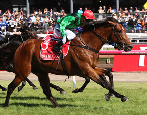 Outstanding galloper Turn Me Loose to stand in New Zealand