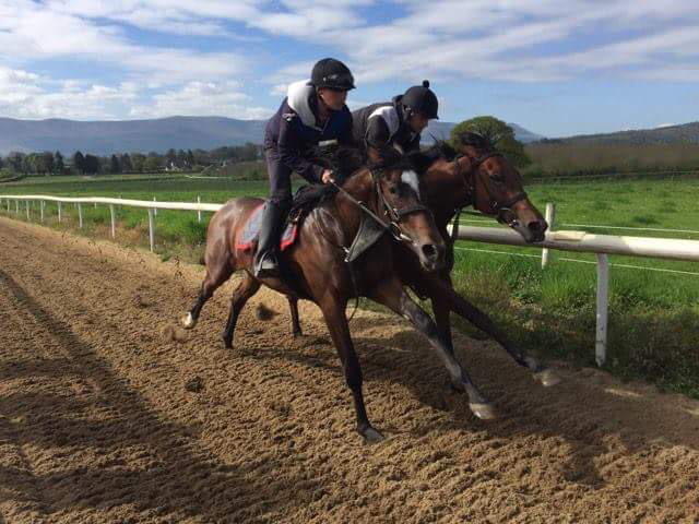 View of Banshahouse's 7 furlong gallop. 2yo breezers in perfect rhythm with one another.