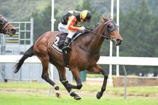 Rock On (NZ) Claims St Leger. Photo: Race Images, Palmerston North.
