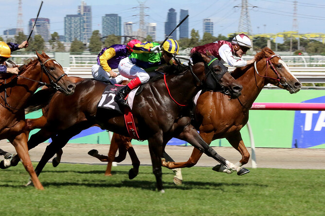 Tivaci (No.12) defeats Palentino and Tulsa in the C.S. Hayes Stakes at Flemington-  photo courtesy of Darryl Sherer