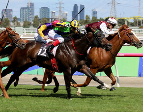 Waikato Stud moves for Group One contender