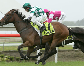 Lasarla wins the NRM Auckland Thoroughbred Breeders' Stakes