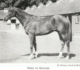 Pride Of Kildare (IRE) 1948 h. [Royal Charger-Gainsborough Lass]