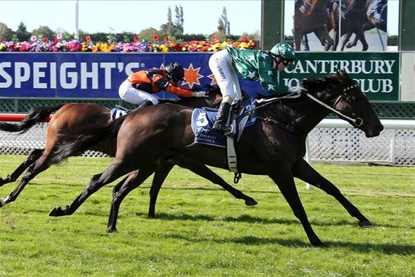 Include wins the Listed Valachi Downs South Island Breeders' Stakes 21/3/15 - (picture courtesy of Race Images)