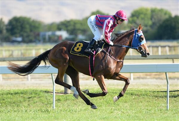 Acquisto wins the NZB Insurance Pearl Series Race over 1600m at Hastings 29/1/15 - Photo courtesy of Race Images Palmerston North