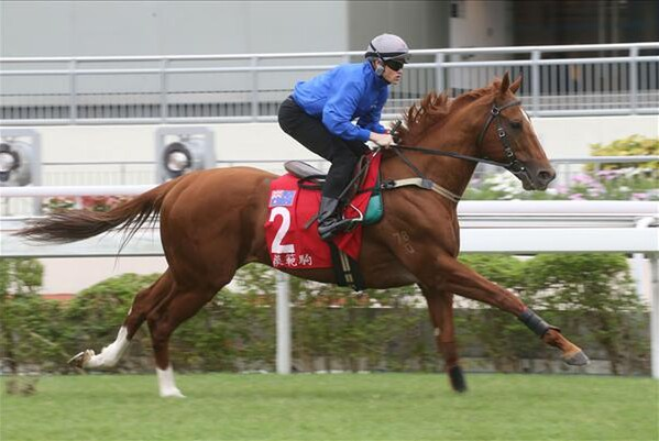 Criterion during trackwork at Sha Tin