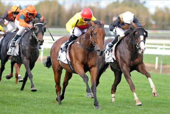 Decorah wins the Gr.3 Swap Stockfoods Manawatu Breeders' Stakes 10.04.15 - Picture courtesy of Race Images