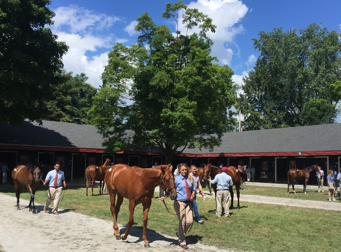 Taylor Made yearlings at Saratoga