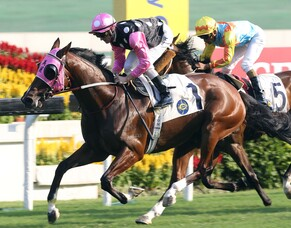 Kiwi breeder to the fore in Hong Kong