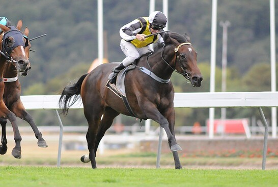Savaria (Savabeel[AUS]-Amathea) wins the G1 New Zealand Oaks in March