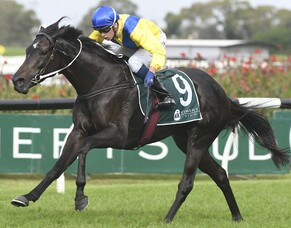 Hiyaam's Group One Success a New Zealand Breeders' windfall