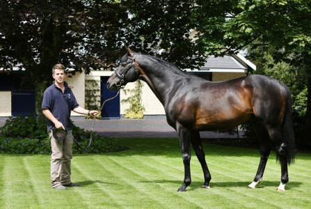 Jamie and 4-time Ascot Gold Cup winner and Coolmore sire Yeats