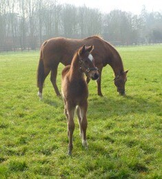 This is a cracking Oasis Dream - Canda (Storm Cat) colt at 14 days.