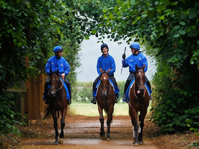The Godolphin blue is a familiar site around the roads in Newmarket