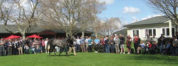 Dalgar parades before breeders on a lovely spring day at BrigHthill Farm - Photo: NZTM