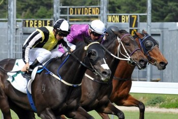 Pero wins the Group 3 Thompson  Handicap at Wellington - Photo: NZTM website