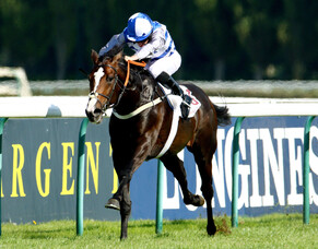 Son of Frankel joins Brighthill roster