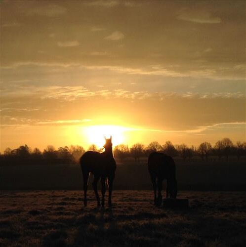 Sunrise at Cheveley Park Stud