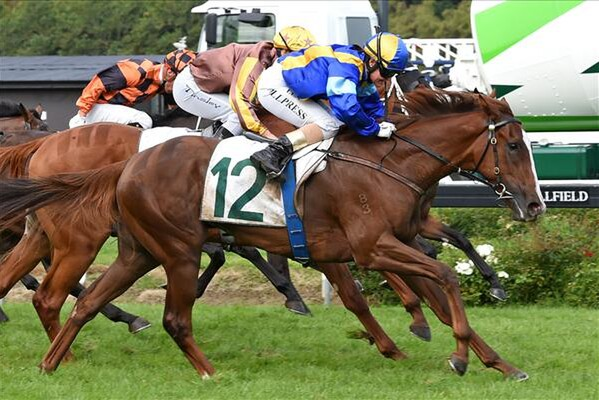 Luna Rossa wins the Gr. 1 Courtesy Ford Manawatu Sires' Produce Stakes 2-4-16 -  Photo courtesy of Race Images