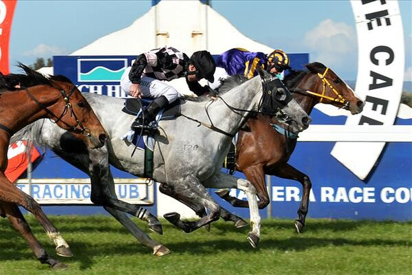 The Filly wins the Rich Hill Stud Taranaki Breeders' Stakes - Photo courtesy of Race Images