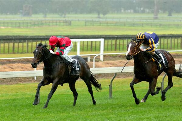 Queens Rose wins the $50,000 Listed Tauranga Classic 20/6/15