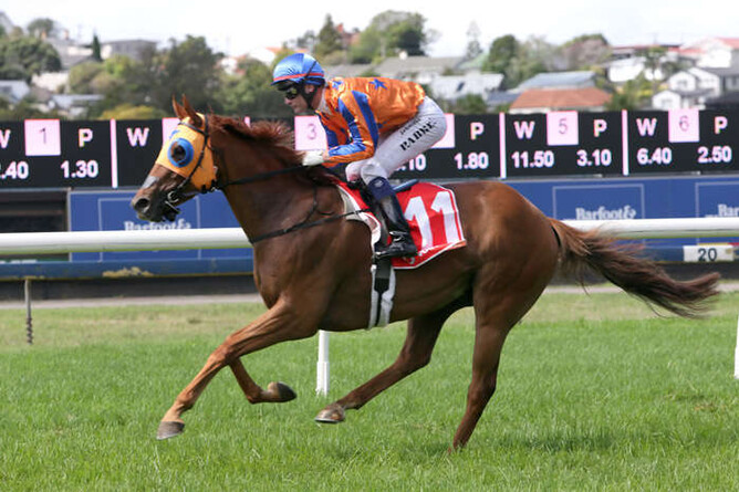 Gingernuts wins the Avondale Guineas (Image: Trish Dunell)