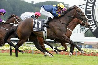 Signify (NZ) Claims Group 1 Telegraph. Photo: Trish Dunell
