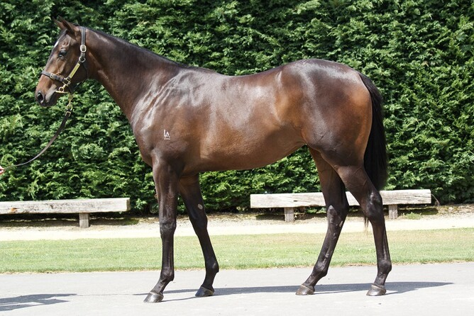 Indecision pictured as a yearling in Little Avondale Stud's 2015 Karaka Premier yearling draft