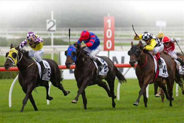 Sacred Falls (yellow and purple colours) wins the Doncaster Handicap. - Photo NZTM website