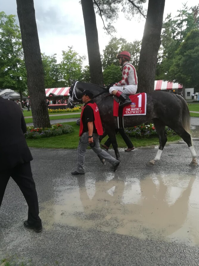 Tapwit trained by Todd Pletcher parading