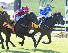 Mission accomplished for well bred filly