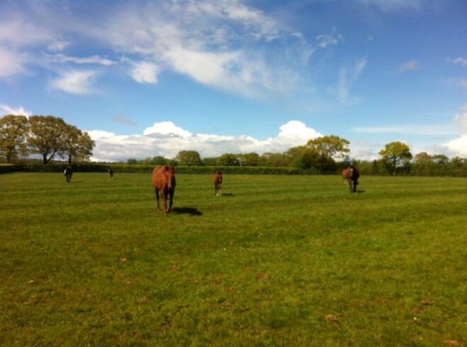 Similar to NZ: The green grass of Coolmore