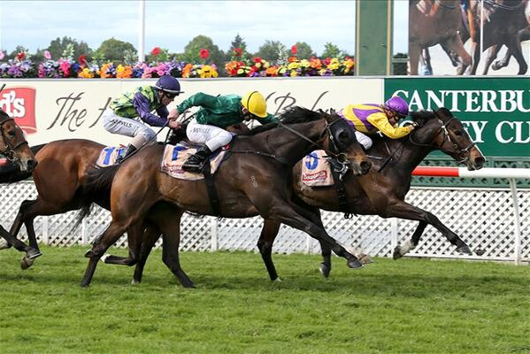 Addictive Habit (inside) wins the Couplands Mile 12-11-14. - Photo courtesy of Race Images South