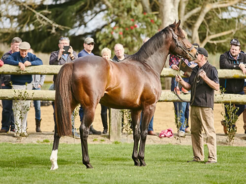 Atlante on parade at Mapperley Stud - NZ Racing Desk