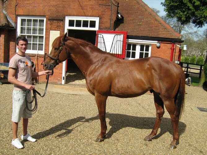 Bruce with Cheveley's Champion Stallion Pivotal.  (Note the stallion handler's off-set knees!)