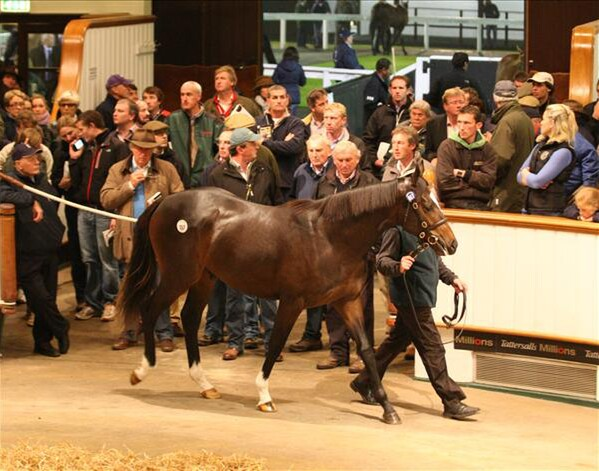 Tattersalls sale topper, Lot 557, the Galileo colt three quarter brother to Authorized went to the bid of David Redvers for 2,500,000gns
