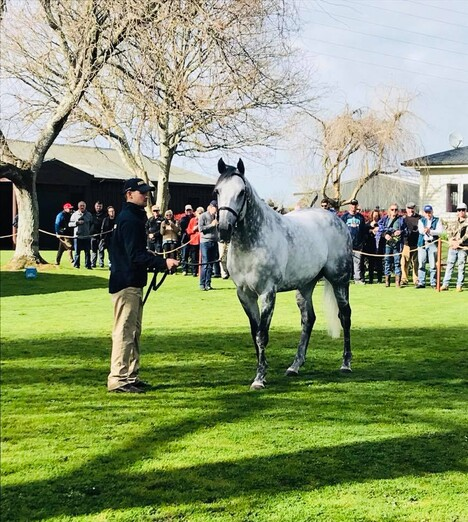 Dalghar on parade at Brighthill Farm during last year's stallion parade