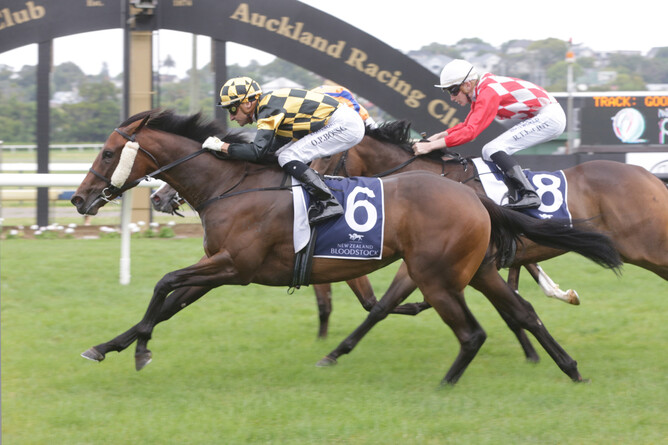 Probabeel (Savabeel - Far Fetched by Pins) winning the NZB Insurance Pearl Series 1200m race at Ellerslie  - photo Trish Dunell