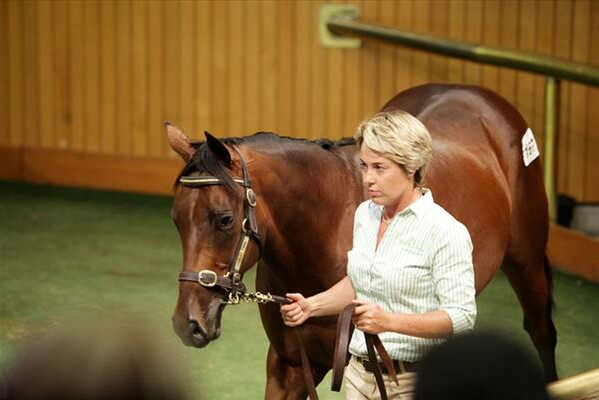 Pictured above - Premier Sale 2012 - Sarah Devcich leading a Darci Brahma colt in the Henley Park draft. - Picture by Trish Dunell