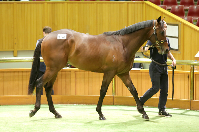 Cambridge bloodstock agent Garry Carvell purchased lot 352, a Per Incanto colt, for $330,000 out of Riversley Park's draft. - Trish Dunell