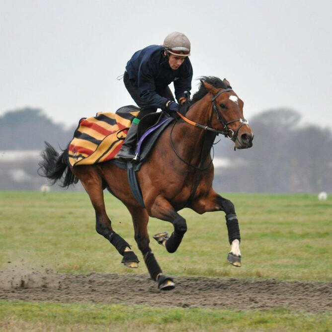 Frankel works on the Cambridge Road Gallop.